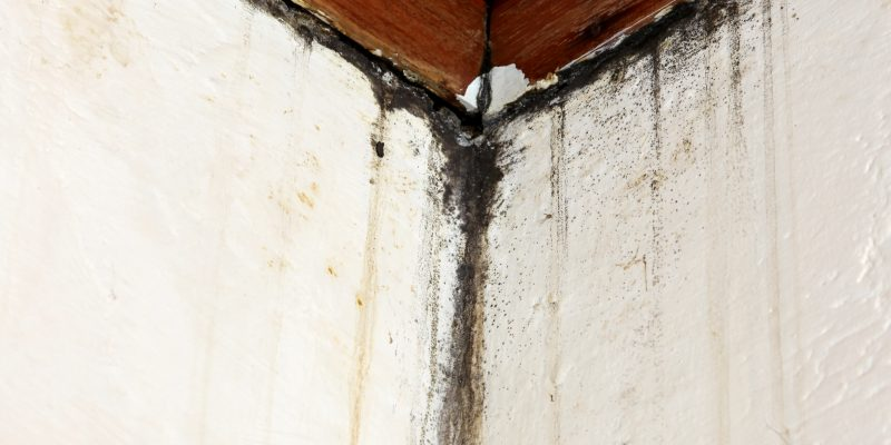 Mold Inspection in West Palm Beach