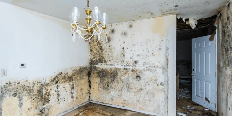 Call Titan Restoration Construction For Mold Remediation In Your Jupiter and Palm Beach Gardens Property