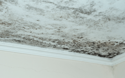 Mold Damage Reconstruction In West Palm Beach Homes