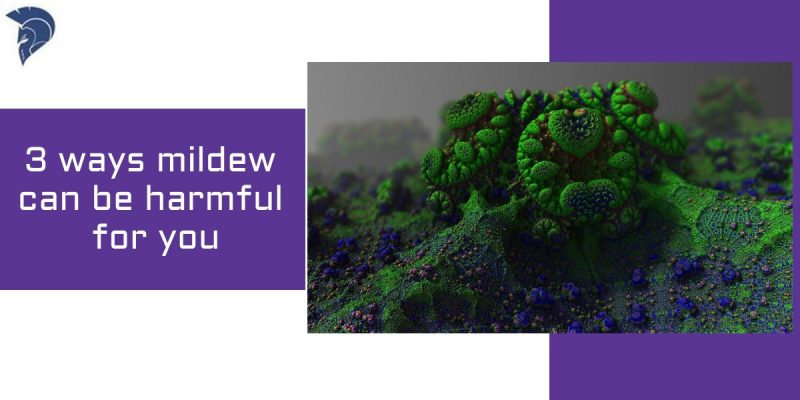 3 ways mildew can be harmful for you