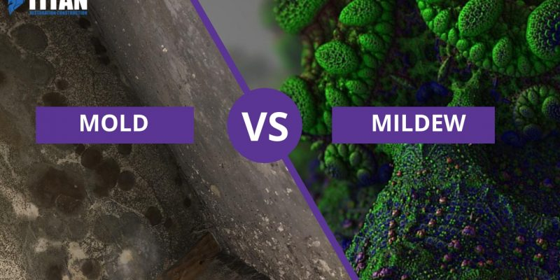 Mold Vs Mildew: What you need to know (comparison table)