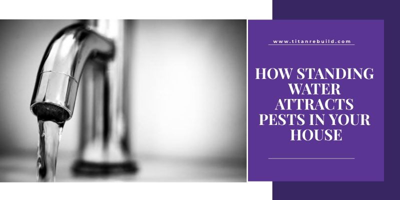 How standing water attracts pests in your house