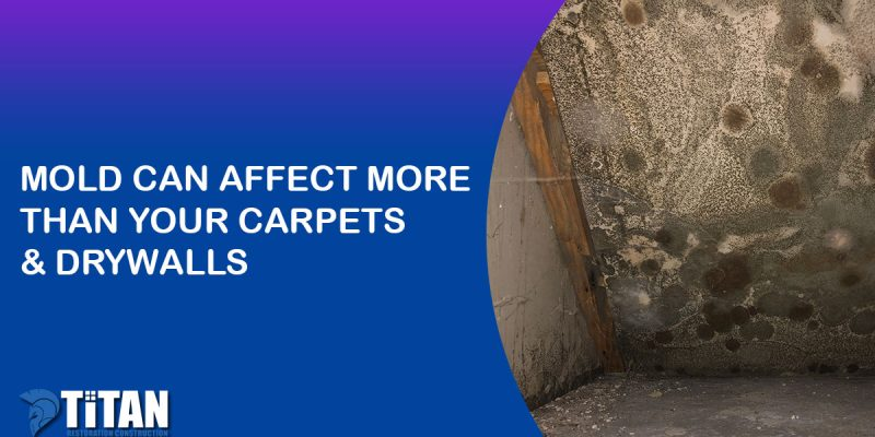 Mold Can Affect More Than Your Carpets & Drywalls