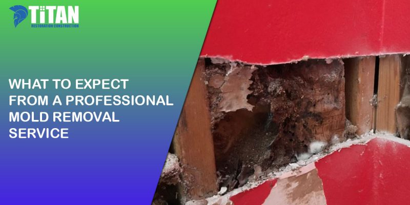 What to Expect from a Professional Mold Removal Service
