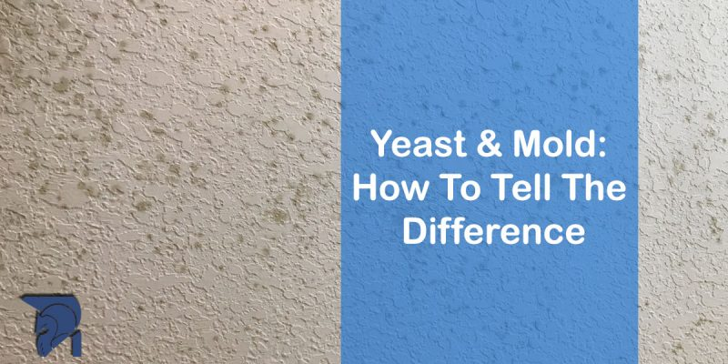 Yeast & Mold: How To Tell The Difference