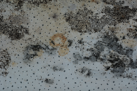 Black Mold Damage