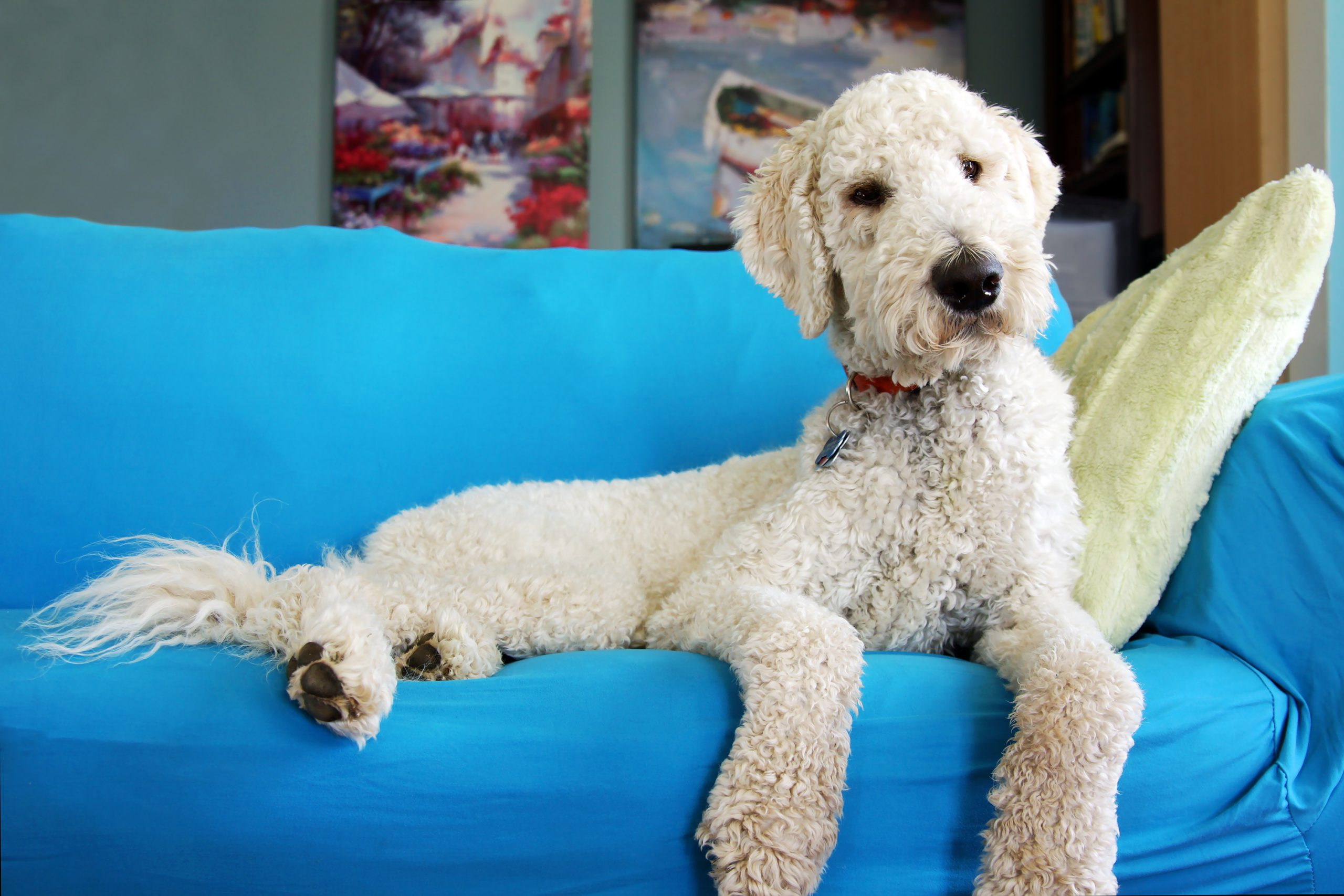 Avoiding and Removing Pet Odors From Your Home