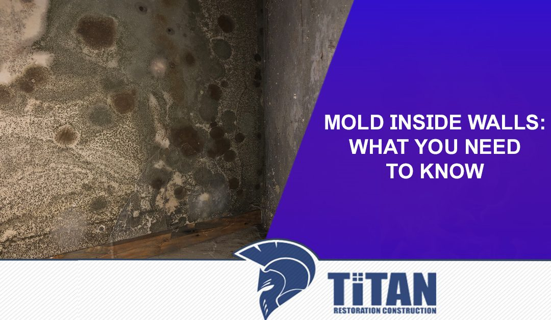 Mold inside Walls: What You Need To Know